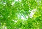 PAK86_komorebitohizashi500