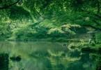 成田山(竜智の池)