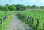 柵で区切られた遊歩道