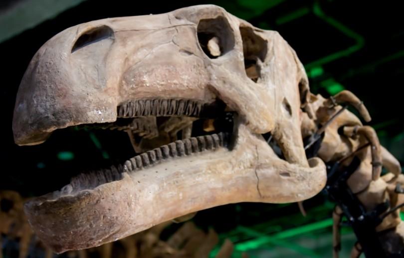 大きな恐竜の骨格標本