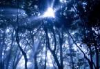 瞑想中に見た光の森