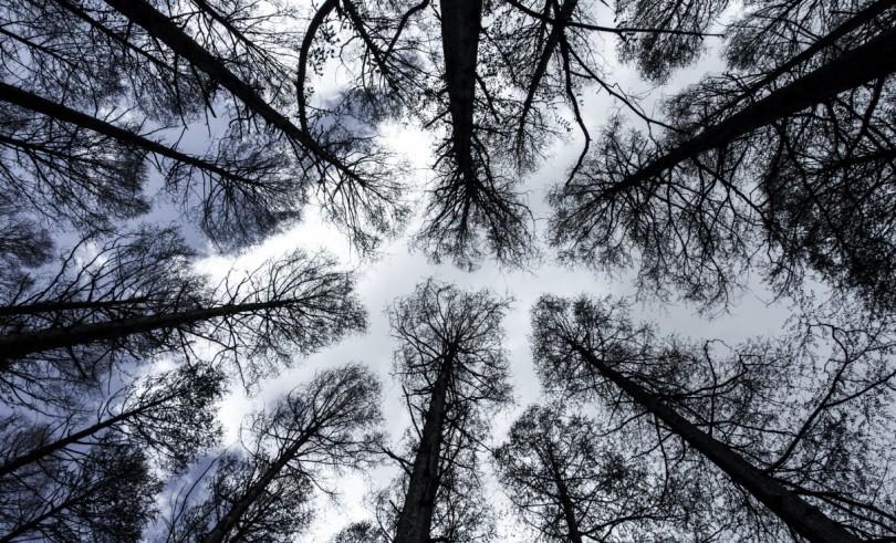 木々を仰ぐ