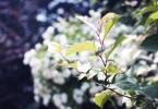 いのちを感じる美しい葉