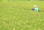 いいアイディアが出ないものかと田んぼで企画書をつくるディレクター
