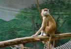 かっこいい猿