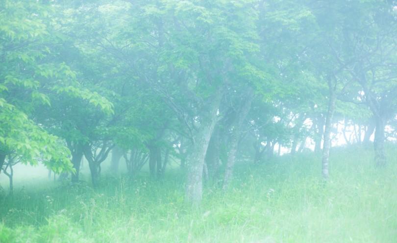 幻想的な森