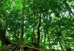 山林の木々