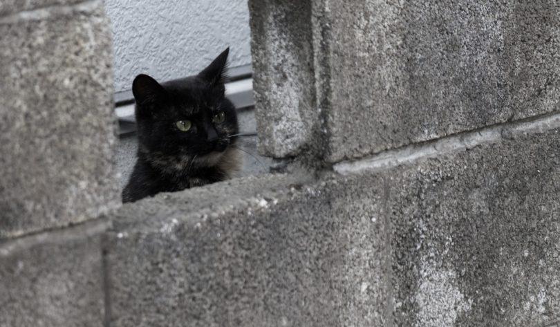 覗き見するネコ