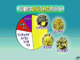 早春の花色統計
